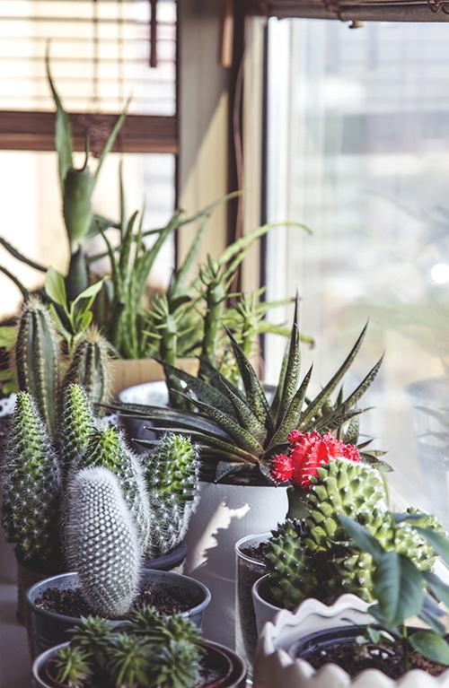 deco-cactus